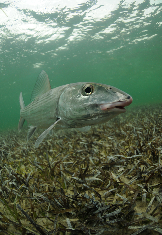 bone fishing and ecotourism in Andros, Bahamas