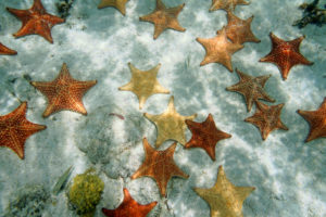 colorful starfish underwater of the crystal clear beaches of Bimini
