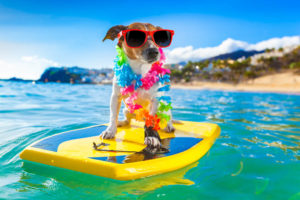 Top 10 Pet Friend Resorts in the Bahamas Caribbean