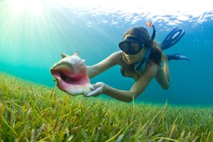 A freediving girl in dive gear swimming over the sea grass along the ocean floor showing a newly discovered conch